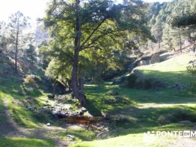 El Castañar de El Tiemblo , Un bosque mágico;senderismo en madrid rutas;excursiones senderismo mad